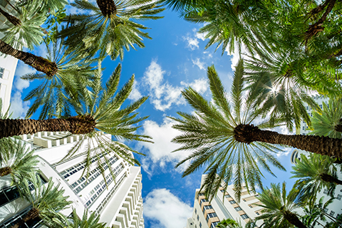 A stock photo. An upward view of palm trees in the Brickell neighborhood of downtown Miami, Florida.